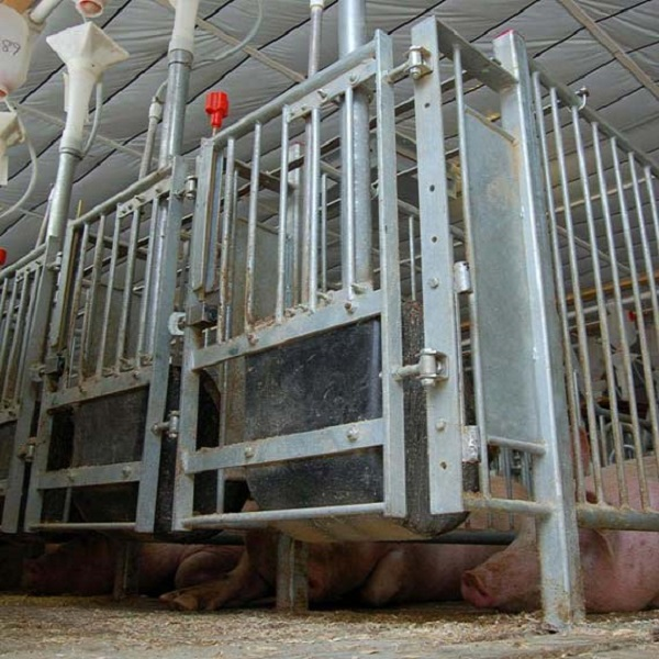 One of Hottest for Pig Feed Trough - INN-O-STALL® CONFINE Stalls – Egebjerg